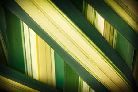 Details of woven leaves, palm family.