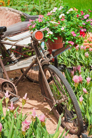 Three wheel bicycle Vintage, and decorated with flowers  photo