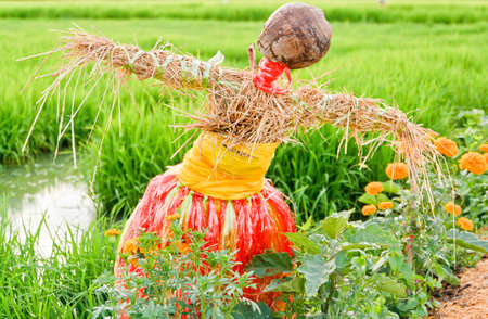 Rice field with scarecrow in thailand Stock Photo