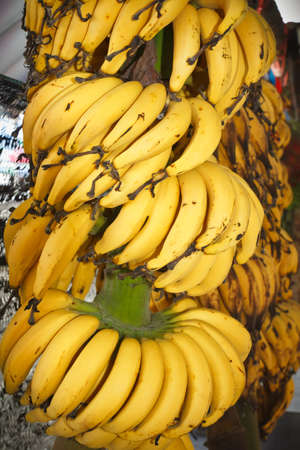 Ripe cultivated banana  photo