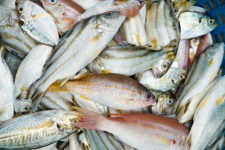 Many sea fish in the basket  Stock Photo - 16654595