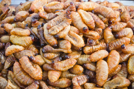 grub larvae fried, ready to eat  photo