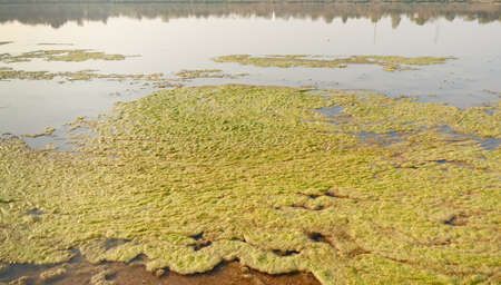 Algae along the Mekong River  Stock Photo - 19536675