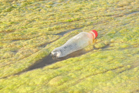 Water bottles used in the algae along the Mekong River  photo