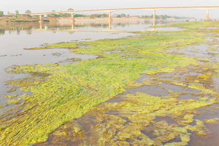 Algae along the Mekong River, the background is the Friendship Bridge Thai - Laos 1st  Stock Photo - 22039596