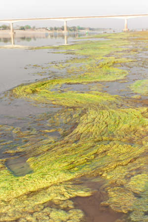 Algae along the Mekong River, the background is the Friendship Bridge Thai - Laos 1st  photo