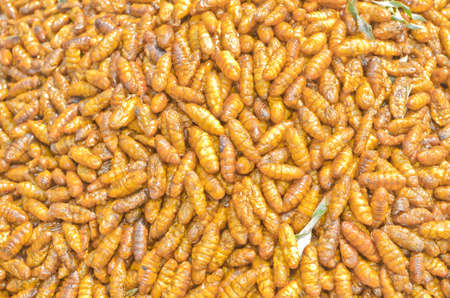 pupae: Silkworm pupa fried, delicious food