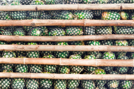 privatization: Pineapple, for lead to privatization in the factory.
