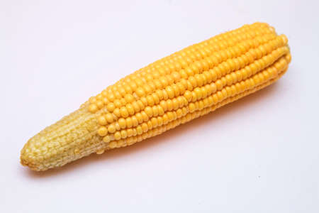 Fresh waxy corn kernel white and yellow in one ear on a white background. Gold yellow ripe maize close-up