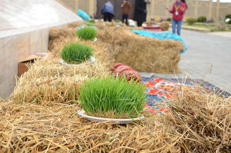 Novruz national Azerbaijan holiday spring new year celebration concept, wheat grass semeni . A seminal siege on a red ribbon on a dry grass