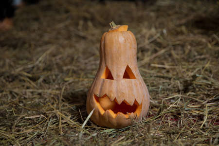 Halloween pumpkin grinning in the most evil fashion . Spooky Halloween Jack o Lantern . Pumpkin on dry straw in autumn on a background . In preparation for Halloween