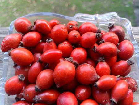 Dog rose fruits Rosa canina closeup photo. Medicinal plants and herbs composition 免版税图像