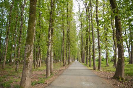The machine path in the forest . country side space empty car road path way . empty lonely asphalt car road between trees in forest outdoor nature environment in fresh weather time with green colors