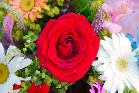 bouquet of multicolored roses . Red flower picture close up in the bouquet . Bouquet of fresh red, white , orange roses .