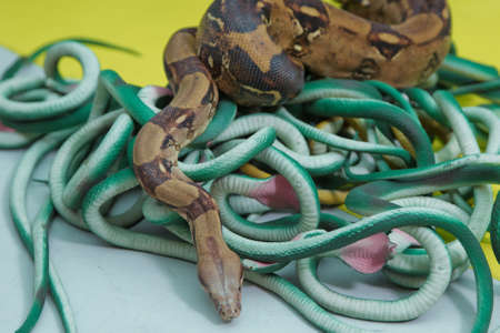 artificial and real snakes on a yellow background .green feather snakes. A snake with a gray spit 스톡 콘텐츠