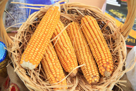 Fresh corn on the cob in wicker basket on brown wooden table. Untreated corn cobs . fresh corn in basket 스톡 콘텐츠