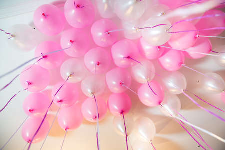 Pink and white balloons float on the white ceiling in the room for the party. Wedding or children birthday party decoration interior . Helium balloons