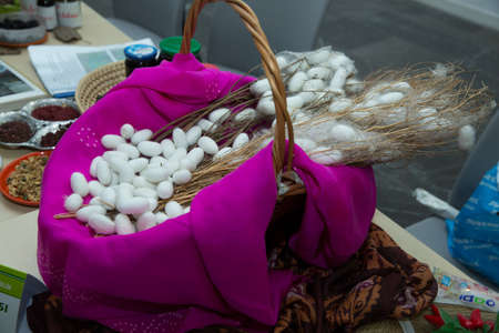 Hot Pink cocoon in the basket . Silkworm Mulberry bombyx mori in the process of producing silk during cocooning. cocoons of silkworm for silk making