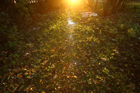 Sun shine through autumn trees with autumn foliage leaves in grass . The sun is setting and dawn is breaking. Water flows through the grass. The sun shines through the trees Foto de archivo