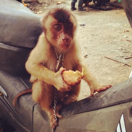 otganimalpets01: Monkey eat bread