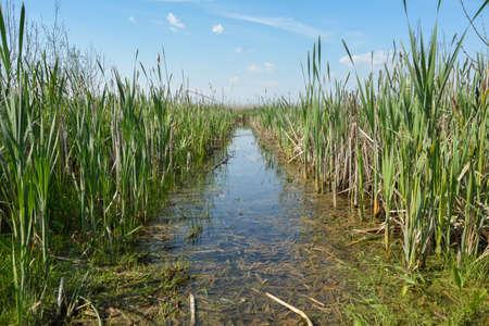 moorland: Moorland in Natural Park Comana, Romania Stock Photo