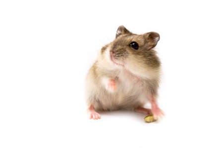hamsters: Hamster sniffing