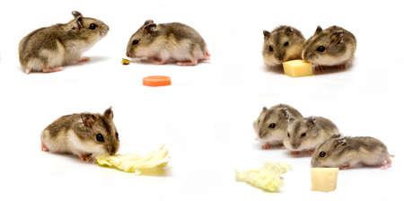 furry animals: Collage de cría de hámster Foto de archivo