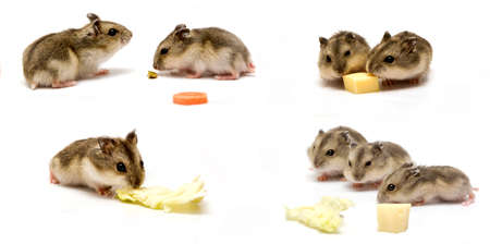 Hamster baby collage