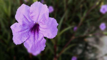 purple flower: Purple Flower