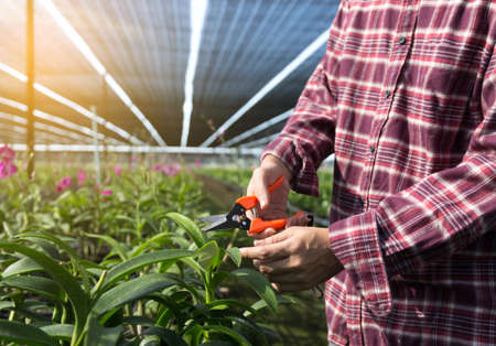 Farmer fresh vegetables, agriculture food production concept agricultural growing activity Stock Photo