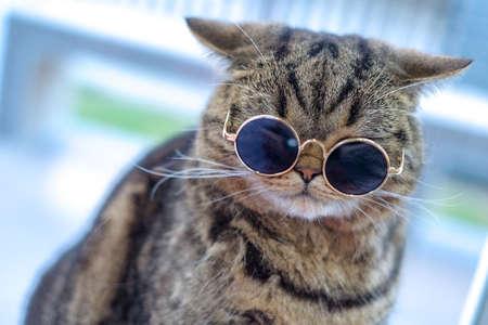 Portrait cat closeup cute Stok Fotoğraf