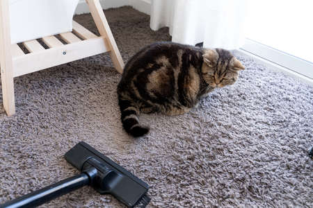 vacuum cleaner  cat sprawled cleaning cat hair dropped Stock Photo - 117972048