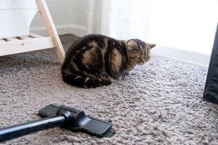 Staubsauger Katze ausgestreckt Reinigung Katzenhaare fallen gelassen Standard-Bild