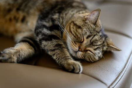 Love cats sleeping in sofa Cute cat