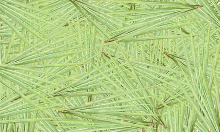 The green cane leaves are arranged beautifully with the spoon liner. Suitable for graphic designers Sugar cane is a popular agricultural product.