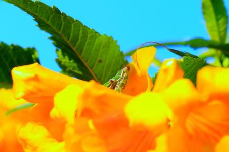 hidden grasshopper photo