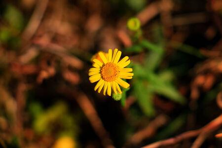 teeny: teeny flower