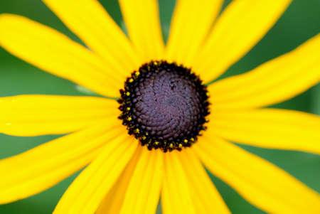 Pollen Track on Yellow Flower Stock Photo