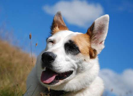 Dog on a Walk Stock Photo