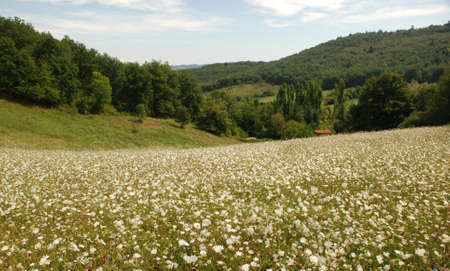 French Countryside Stock Photo - 12943027