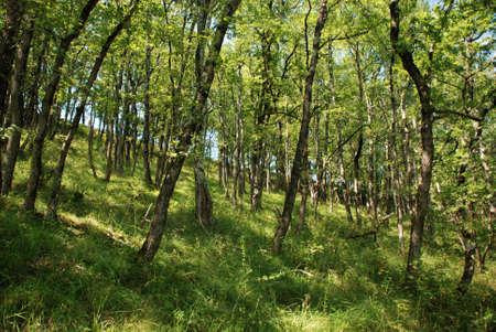 French Woodland Stock Photo