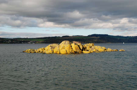 Seaweed covered rock in the sun