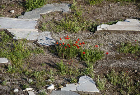 Poppies and Paving Stones
