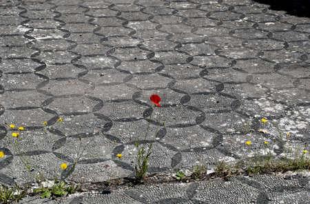 Poppy and Mosaic Stock Photo