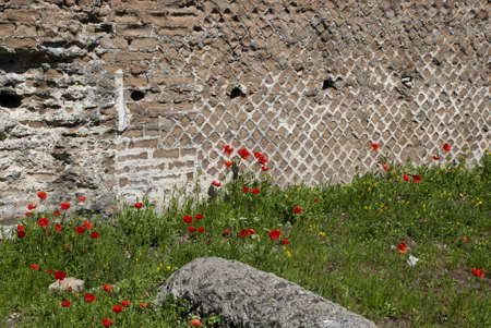Poppies and Ruins