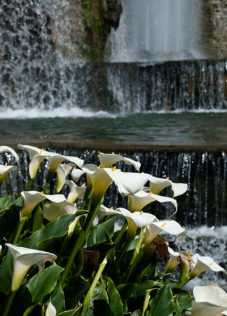 water feature: Calla lilies and water feature, Villa d Este