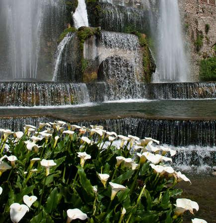 Fountain with calla lilies, Villa d Este, Tivoli