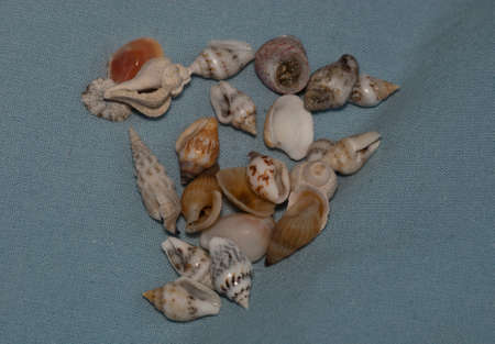 Tiny Sea Shells Stock Photo