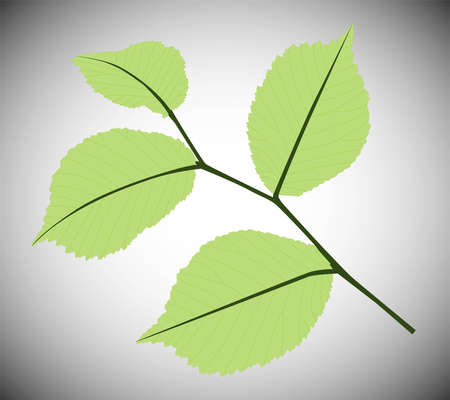 foliage Stock Vector - 15705907