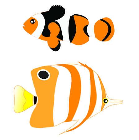 Riff-Fischen / Clownfisch Fisch Isoliert Auf Weißem Hintergrund ...